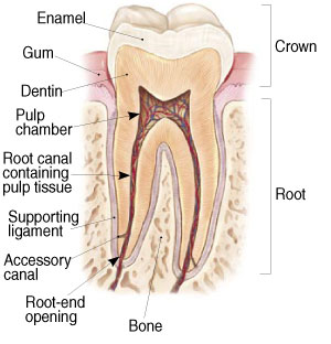 Root Canal Therapy (Endodontics) in Spokane Valley, WA 99206